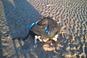 Hunt for owner of dog tied into a backpack and thrown in the sea